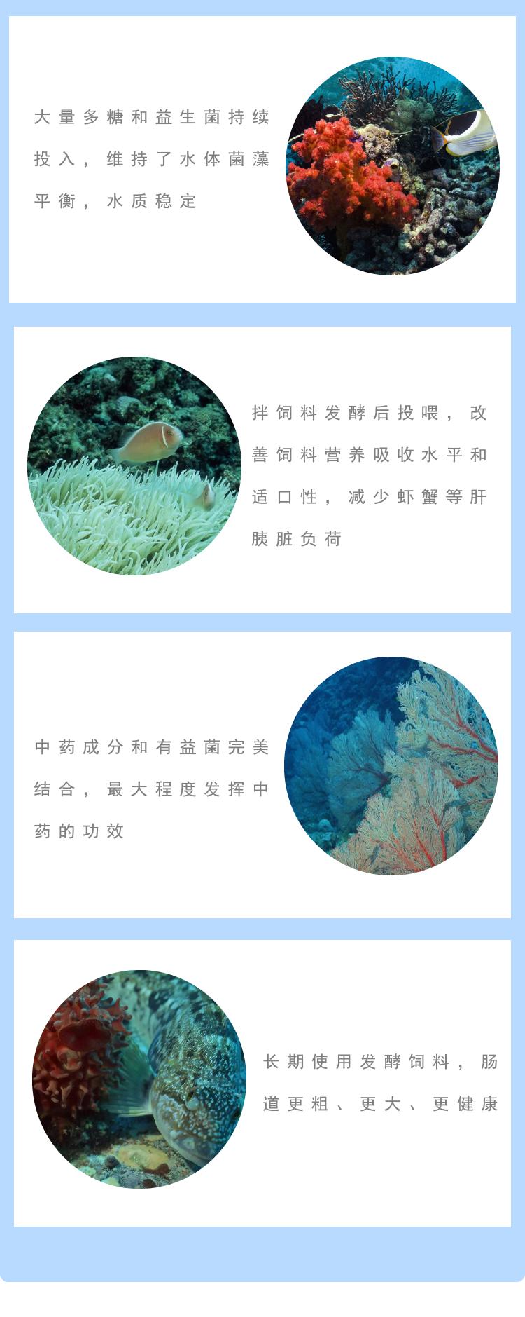 虾蟹酵素-3.png